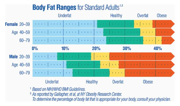 BodyFatRangeChartLarge